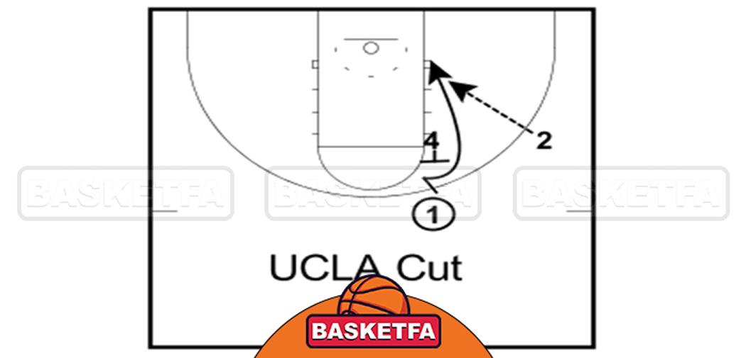 برش UCLA